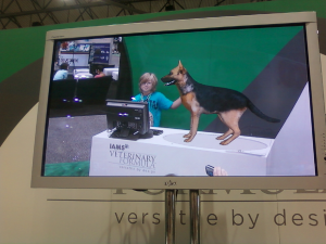 Interactive technology gives kids a taste of Veterinary Medicine at our Continuing Education event.