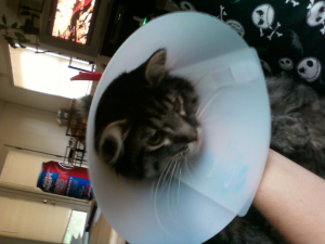 Poor little Sniper wouldn't leave his incision alone so he earned himself a cone.
