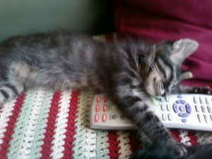 Sweet little Sniper already knows how important a remote control can be.