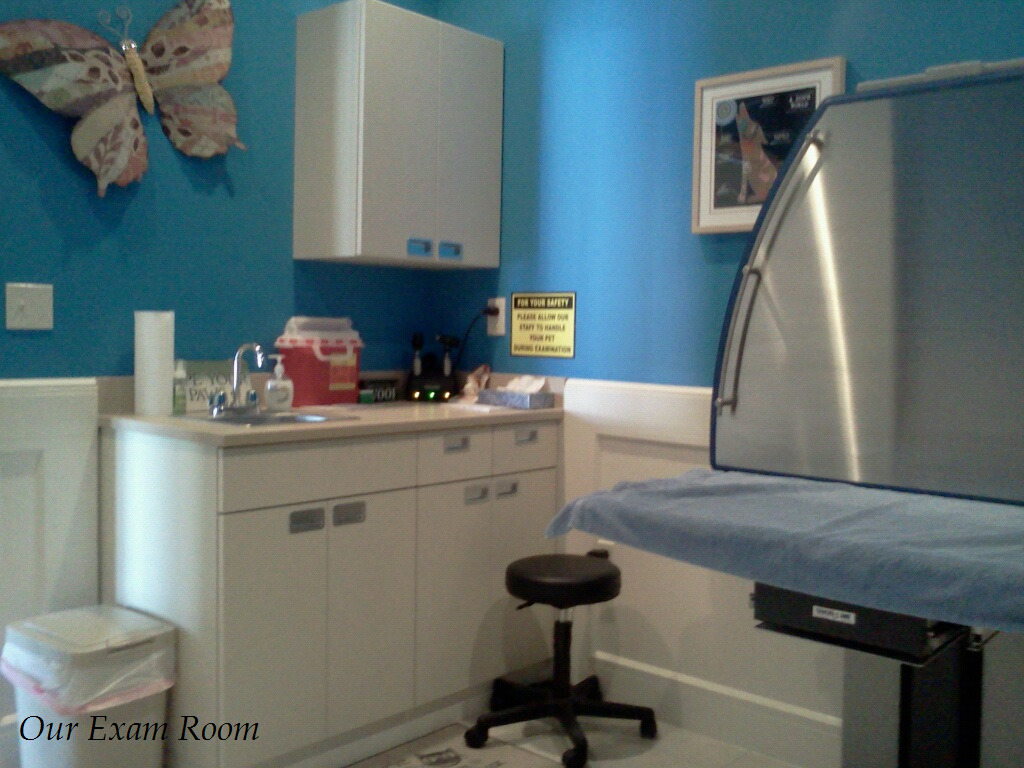 Welcome to our Exam Room, where you and your pet will meet with and talk to Dr. C during appointments.