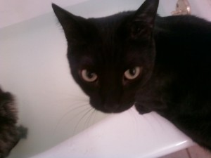 Dr. C's cat, Highway, is not so sure about this bath thing.