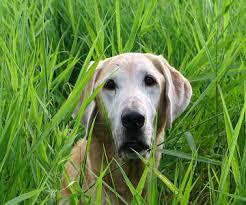 mature dog 2