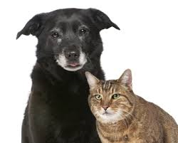 mature dog and cat 2