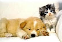 puppy and kitten 7