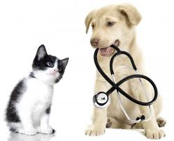 Veterinary Team